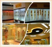 Human Science Museum
