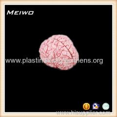 human brain with arteries 3d anatomy models