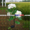 Plastic Solar Garden Light Stick Flower