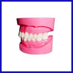 available dental acrylic teeth