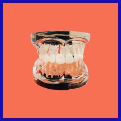 adult oral pathology model