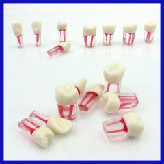 hospital acrylic denture teeth