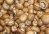 WE PROVIDE QUALITY FRESH WHITE TRUFFLES/mushroom Grade AAA