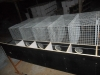 stainless steel welded mesh mink cage/hot dipped galvanized mink cage/mink wire mesh cage