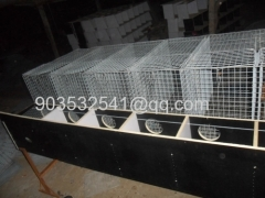 stainless steel welded mesh mink cage