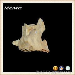 human upper jaw bone specimens