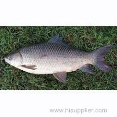 Fresh Fishes Fresh Fishes