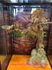 Yinchen wooden Buddha beads-eaglewood-4
