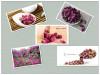 Dried red rose petas