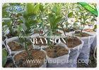 Size 12 cm x14 cm White Color Plant Non Woven Cultivating Bag For Garden