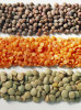 Red lentils wholesale 2015 For export