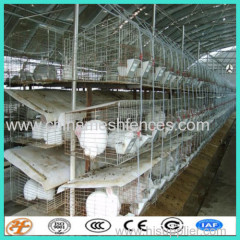 breed and commerical rabbit cages