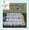 Organic Chinese Fresh Garlic 10kg/mesh bag