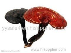 Fda Reishi Mushroom Extract /Reishi Extract/Ganoderma Lucidum Extract
