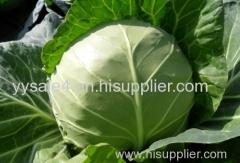 Health food organic Kale Extract Powder/ Brassica oleracea Extract