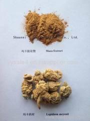 Pure natural macamide 10:1 Lepidium meyenii/Maca root Extract Organic Maca Powder