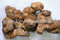 High Quality Solomon's Seal Extract / Huang Jing Extract / Polygonatum Multiflorum Extract / Rhizoma Polygonati Extract