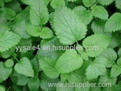 Natural nutrition supplement 10:1 Melissae folium Extract/ Lemon balm Extract/ Melissa Officinalis Extract