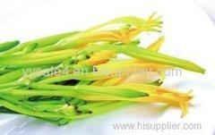 Bulk Supply High Quality Natural Hemerocallia Fulva extract
