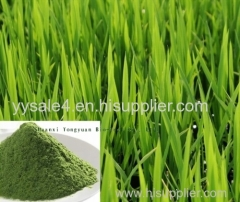 TOP Quality Natural Whole plant extract Barley Grass Extract/ Wheat grass P.E.