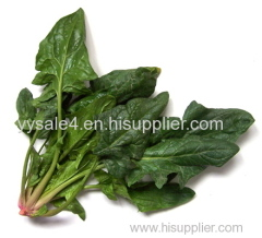 High Quality Pure Natural Oganic powder 10:1 Spinach extract(Spinacia Oleracea Extract)