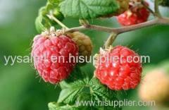 China Factory supply Rubus idaeus leaf Extract/ Red Raspberry Leaf Powder