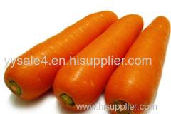 100%natural organic Carrot Extract Beta-carotene 10:1