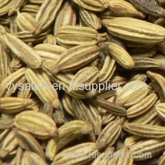 supply high quality Fennel seed extract/Fennel seed P.E. 10:1TLC