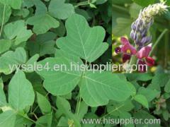 Best price Kudzu Root extract Puerarin 98%/Isoflavones 40%