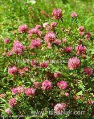 100% Natural bulk Red Clover P.E. Extract Isoflavones 2.5% 8% 20% 40%