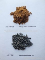 Fructus Ligustri Lucidi Extract/ glossy privet fruit extract
