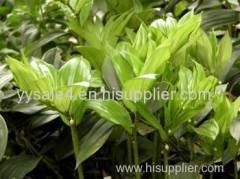 free sample high quality made in China Rhizoma polygonati Odorati Extract 10:1