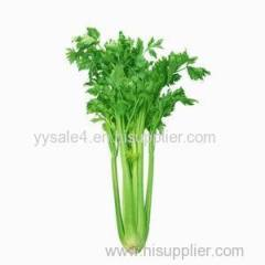 Best Selling Natural Organic 10:1 Celery Seed Extract