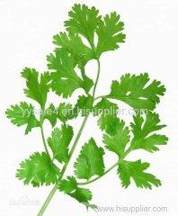 Hot sales Bulk Petroselinum Crispum Extract/Parsley Extract powder 10:1