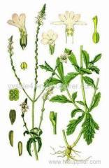 100% Pure natural Verbenae heba P.E. Extract powder in bulk supply