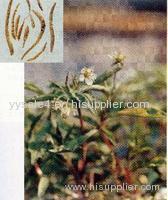 100% Natural Radix Pseudostellariae/Pseudostellaria Heterophylla Powder