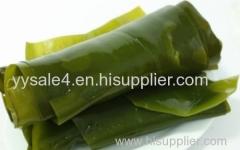 100% Natural 1% Iodine 10:1 Laminaria P.E. Kombu Extract/ Kombu(Kelp) Powder