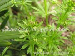 Manufacturer supply pure Natural Galium Aparine Extract/Cleavers Extract/ Bedstraw Extract