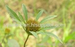 High quality pure natural Bidens Tripartite Extract/ Bidens Pilosa Extract