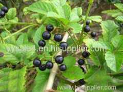 Facotry Supply Cayratia Japonica P.E. (Japanese Cayratia Her b Extract)