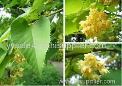 Factory supplier Natural 10:1 linden flower extract/ Tilia Cordata Extract/ Tilia Vulgaris Extract