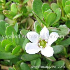 Factory direct sale 100% Natural plant extract powder 10:1 Bacopa monniera extract