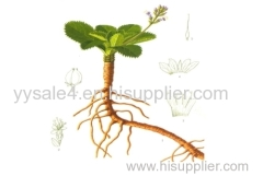 100% Natural High quality Golden seal Extract/ Goldenseal Root Extract/Goldenseal Root P.E.