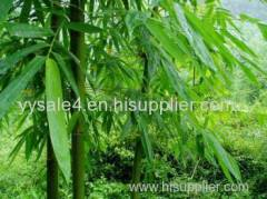 100% Natural and Organic Bamboo Leaf Extract