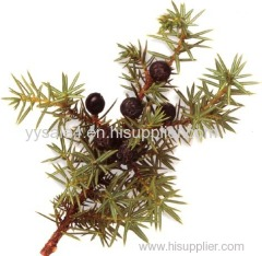Best Selling Good Quality Juniper berry P.E. Extract