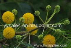 100% Natural Acacia Farnesiana Extract/ Acacia Extract/ Acacia Nilotica Extract