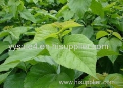 Top garde 100% Organic Plant Extract 1-DNJ 1%HPLC 10:1 Loss weight Mulberry Leaf Extract