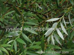 Manufacturer Price Organic Salicin 15% 25% 50% 98% HPLC White Willow Bark Extract