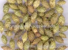 Natural Xanthium Sibiricum Extract/Siberian Cocklebur Extract/ Xanthium Glabratum Extract powder