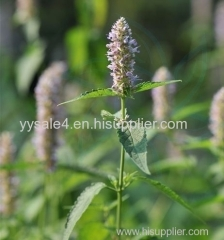Best Quality Chinese Medicine plant Agastache rugosus extract to Eliminating